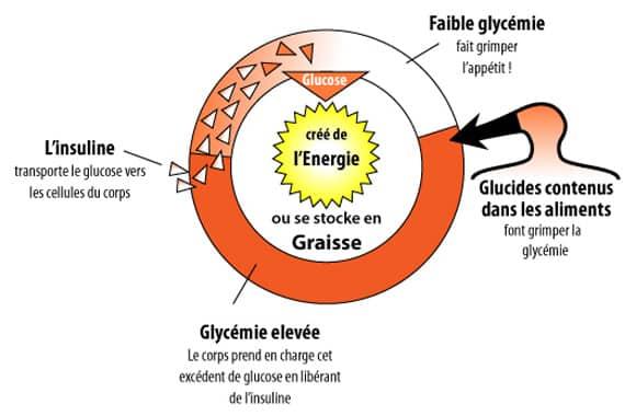 L'indice Glycémique des Aliments : une notion incontournable pour perdre du poids