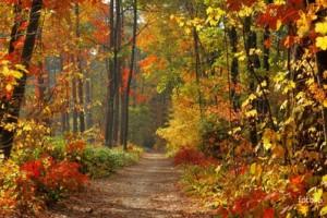 Perdre du poids sans effort physique en automne