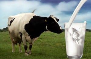 Le lait contient de la vitamine D