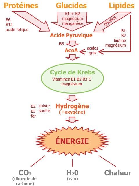 Schéma du processus de fabrication d'énergie