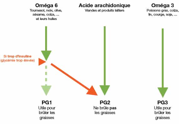 Schéma interraction omega 6 et insuline